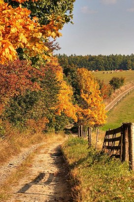 Soothing Autumn Landscape Ideas For This Season27