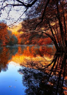 Soothing Autumn Landscape Ideas For This Season32