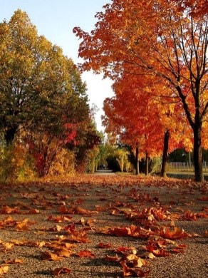 Soothing Autumn Landscape Ideas For This Season36