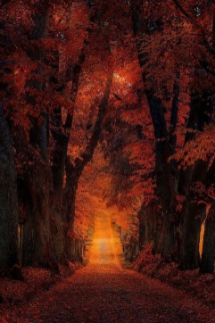 Soothing Autumn Landscape Ideas For This Season37