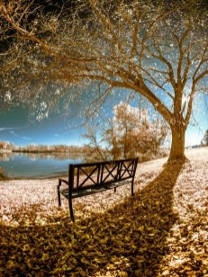 Soothing Autumn Landscape Ideas For This Season39