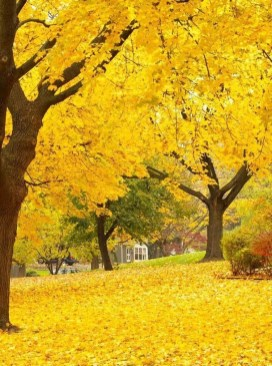 Soothing Autumn Landscape Ideas For This Season45