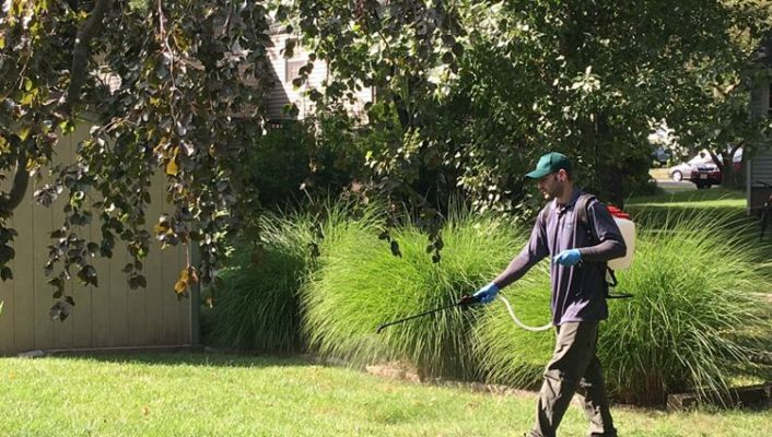 Kill Weeds With Bleach