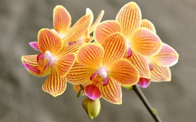 Best Wallpaper With Beautiful Quotes Download Wallpapers Orchids Orange Orchids Beautiful