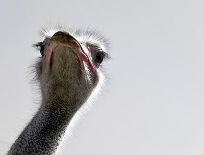 Bird phobia