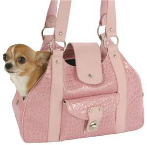 A prime specimen of purse dog.