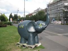 Elefants 5