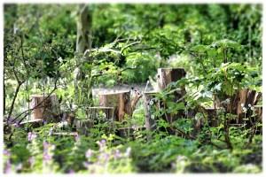 2015-05-28 09.24.34_Snapseed