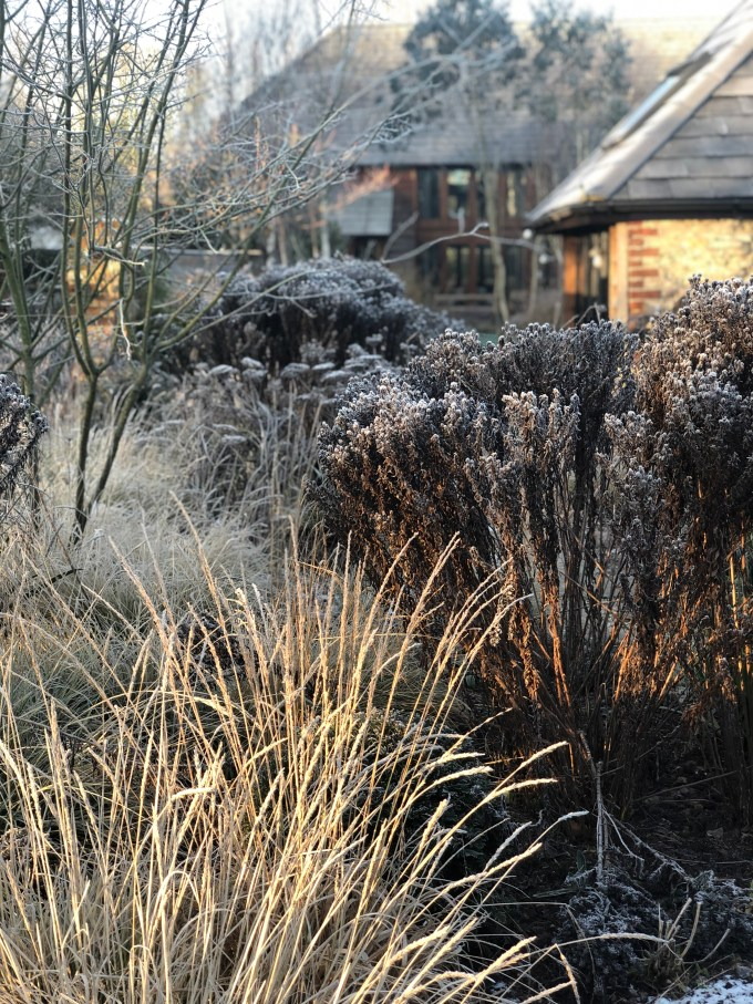 Wintry garden planting with frost