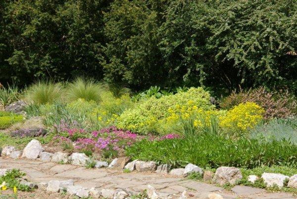 plants dry areas