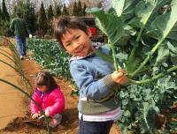Iijima Farm broccoli pull