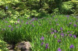 Nezu Museum Garden, Best Living Japan