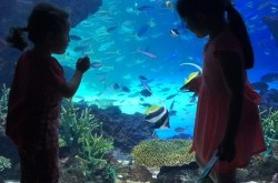 Sumida Aquarium Sky Tree, Tokyo with Kids