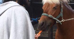 Yoyogi Park Ponies (Yoyogi) - Feed, Brush, and Ride