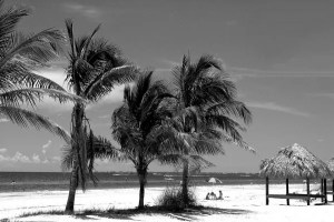 Black and white photo of palms on the beach