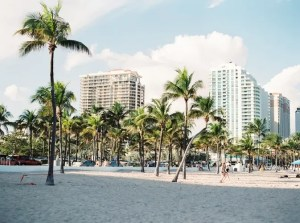 Palms on a beach in Miami.