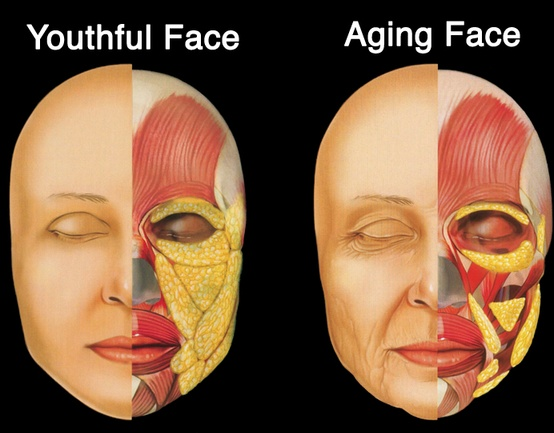 How To Lose Weight Permanently With Yoga Anti Aging Comprehensive Aesthetics For The Aging Face