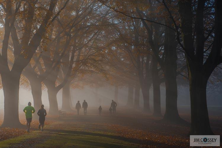 Clifton Down Mist