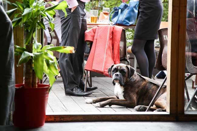 canteen dog