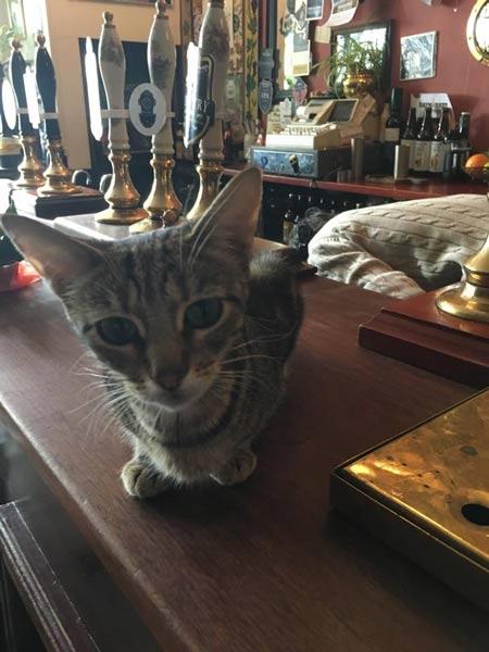 cat on bar