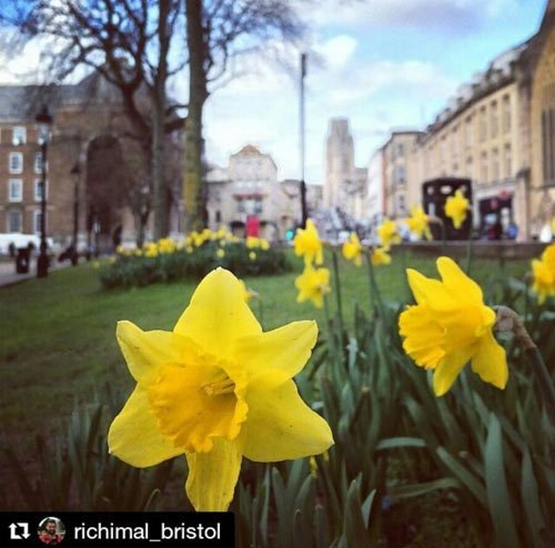 college green in spring