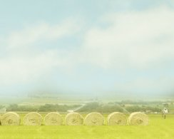 First Cutting Hay Bales 8x10 Archival Photograph