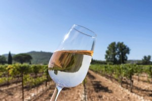 What's Next for NJ Wine