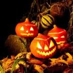 Halloween im Garten