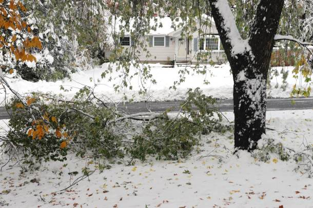 tree fallen down in snow storm in residential district