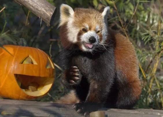 halloween events, best halloween events