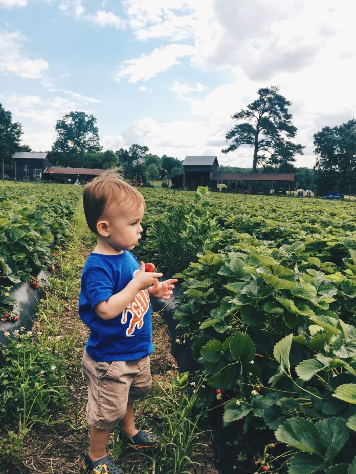 kid friendly things to do in durham nc waller family farm