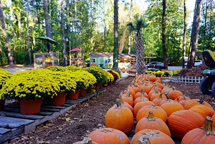 Perkins orchard pumpkin patches durham nc