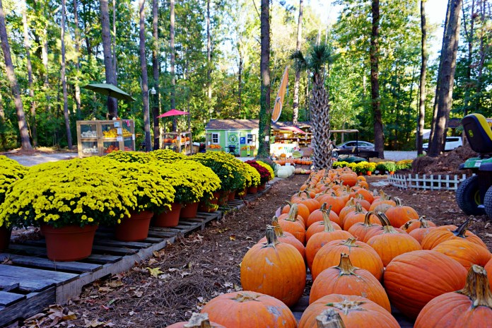 Perkins orchard pumpkin patches durham nc