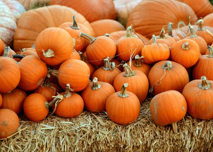 page farms pumpkin patch durham nc