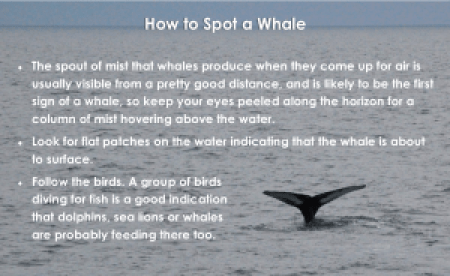 How to Spot a Whale