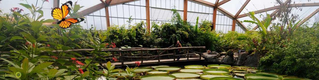 حديقة حيوانات روتردام