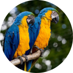 macaw information & guide