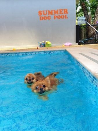 waterproof pet tracker