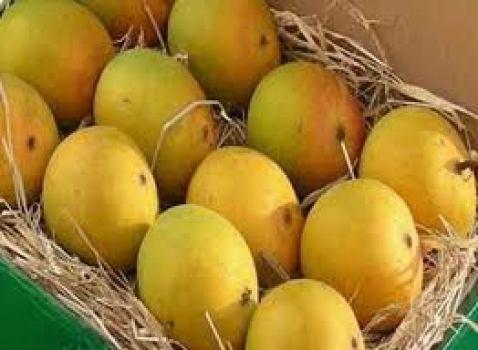 Alphonso mangoes (courtesy www.mangosmumbai.co.in)