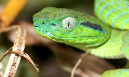 Creepy snake