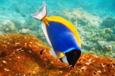 Bandos House Reef, Maldives