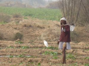 A farmer with a bird in Rajasthan
