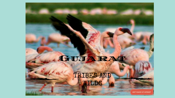 Tribes and Wilds in Gujarat- Part 2