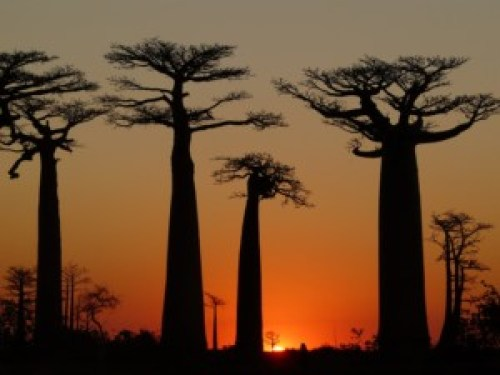 Baobabs avenue sunset-bizarre places