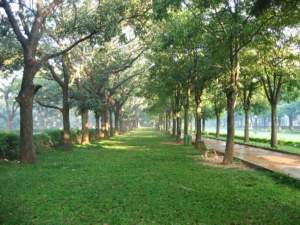 Cubbon park, Bangalore, Bengaluru