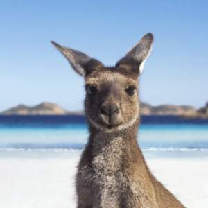 Reasons why you should visit Australia
