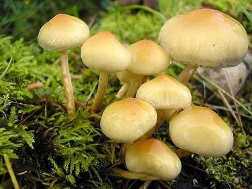 The Magnificent Mushroom!