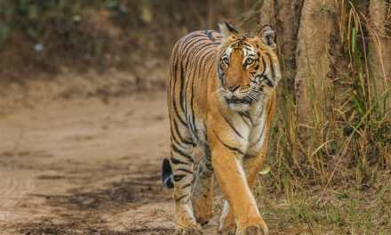 Jim Corbett National Park