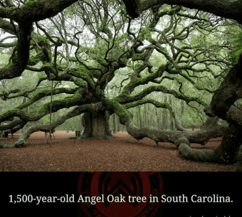 Oak tree in California, USA, breathtaking places of the world