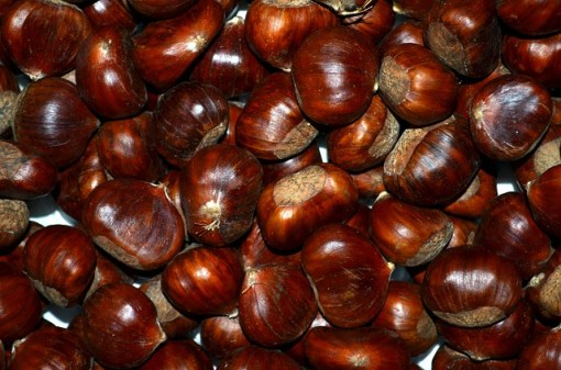 chestnuts autumn roasted chestnuts brown, Spain